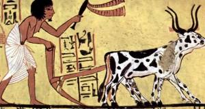 rolnictwo-egipt2